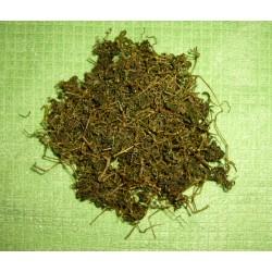 Jiaogulan (Tee der Unsterblichkeit)